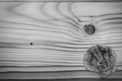Havsskal på en trätabell Royaltyfri Bild