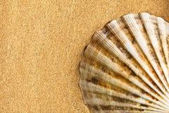Havsskal på sand royaltyfri foto
