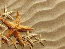 Havsskal på sand royaltyfri fotografi