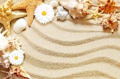 Havsskal på sand, sommarbegrepp arkivfoton