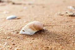 Havsskal på sanden Royaltyfria Foton