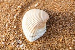 Havsskal på sanden Arkivbilder