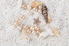 Havsskal på sanden Royaltyfri Fotografi