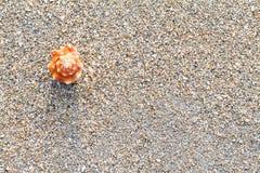 Havsskal på sanden på stranden Fotografering för Bildbyråer