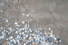 Havsskal på sandsommarstranden Royaltyfria Bilder