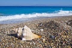 Havsskal på stranden Arkivbilder