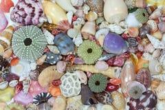 Havsskal samlade på kusten av Costa Rica Royaltyfri Fotografi