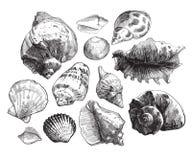Havsskal skissar uppsättningen Royaltyfri Bild