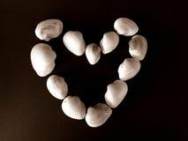 Havsskal som bildar en hjärta fotografering för bildbyråer