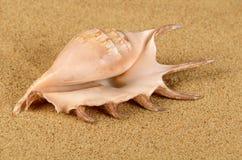 Havsskalet i sanden Arkivbild