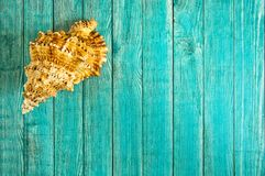 Havsskalet på en träbakgrund av blått färgar Arkivfoto