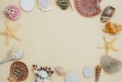 Havsskalram på neutralt utrymme för elfenbenBackgroundwith kopia för text Nautisk och Marinne begrepp arkivfoto