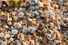 havsskaltextur Royaltyfri Fotografi