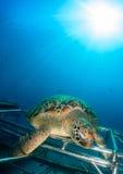 Havssköldpadda med sunburst Arkivbild