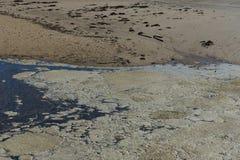 Havsskum vid stranden royaltyfria foton