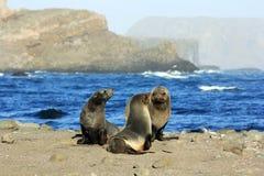 Havsskyddsremsor Arkivbilder