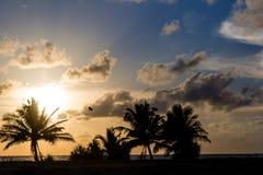 Havssolnedgång och palmträd arkivbilder