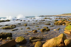 Havsstenar på stranden i Jaffa Fotografering för Bildbyråer