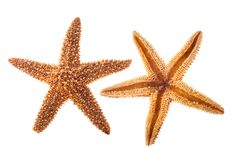 Havsstjärna royaltyfri foto