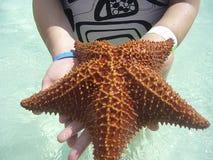 Havsstjärna i saonastrandDominikanska republiken Royaltyfria Bilder