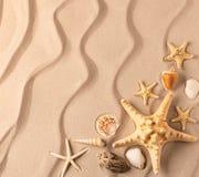 Havsstjärna och shelfish på den krusiga sanden royaltyfri fotografi