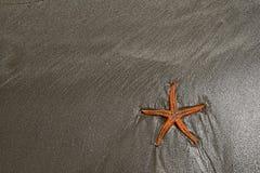 Havsstjärna på en strand Royaltyfria Foton