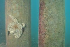 Havsstjärna på pir royaltyfria bilder