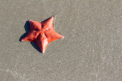 Havsstjärna på sandbakgrund Fotografering för Bildbyråer