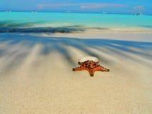 Havsstjärnan på en rengöring och värme stranden royaltyfria bilder