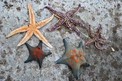havsstjärnor Arkivbilder