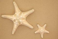 Havsstjärnor Royaltyfri Fotografi