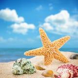 Havsstjärna och färgrika skal Arkivbild