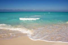 havsturkos Arkivfoton