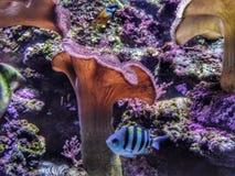 Havsvärld Royaltyfri Foto