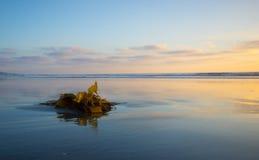 Havsväxt Arkivbilder