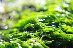 Havsväxt Arkivfoto