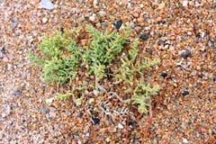 Havsväxt eller wrack Royaltyfria Bilder