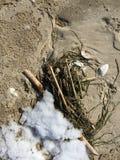 Havsväxt, en pinne och skal tvättades upp på stranden Arkivfoton