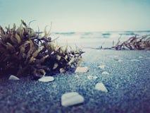 Havsväxt och hav Royaltyfria Bilder