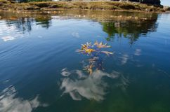 Havsväxt och reflexionen av moln Arkivbild