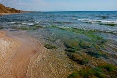 Havsväxt och sand på kusten av Blacket Sea Arkivfoto