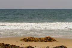 Havsväxt och vrakgods som tvättas upp på en sandig strand arkivfoton