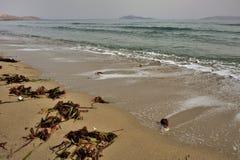 Havsväxt på kusten Arkivfoton