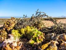 Havsväxt på stranden Arkivbild