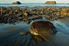 Havsväxt täckt stenblock på den Oregon kusten Arkivfoto