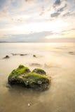 Havsväxt till oändligt Fotografering för Bildbyråer
