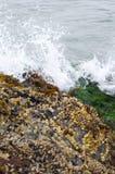 Havsväxt vaggar på nära med att krascha för vatten Arkivfoto