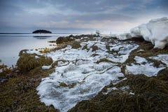 Havsväxtkust av det vita havet under solnedgången Royaltyfria Bilder