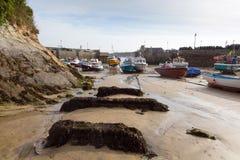 HavsväxtNewquay hamn norr Cornwall England UK Arkivfoto