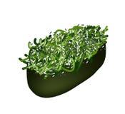 Havsväxtsalladsushi eller Hiyashi Wakame sushi Arkivfoton